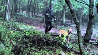「きな子~見習い警察犬の物語~」の動画