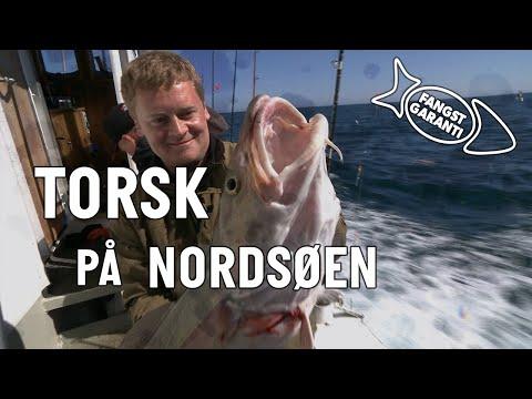 Torskefiskeri fra fiskekutter