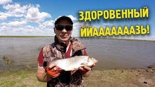 Убойная ловля крупного язя на фидер | Язь - рыба моей мечты |  Рыбалка на реке