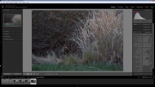 Are Your Tripod Pictures Blurry?  Image Stabilization And Tripods