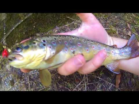 Krkh che pesca allagitatore