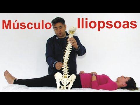Funkcja mięśni ludzkich