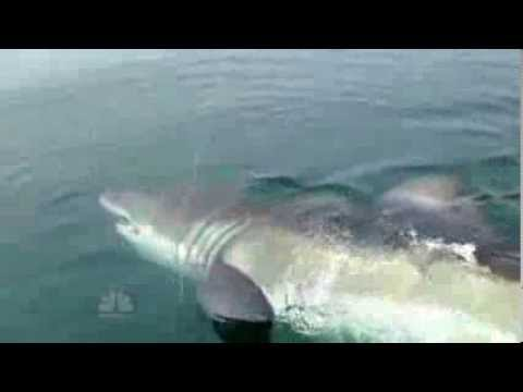 Reel horror,7 scary shark sightings in 60 seconds.
