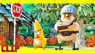 """Angry Birds. La Película Clip """"Chuck, el pájaro travieso"""" Español"""