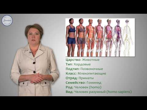 Структура тела. Место человека в живой природе