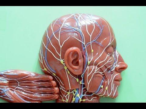 Video Penyebab Kanker Getah Bening