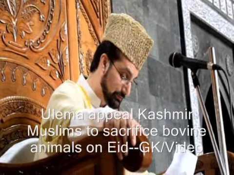 Ulema Ask Kashmir Muslims To Sacrifice Bovines On Eid