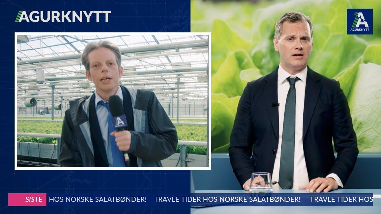 Travle tider hos norske salatbønder