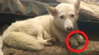 Woman Rescues Dog From Cage In Woods, Then Notices Its Legs by Did You Know Animals?