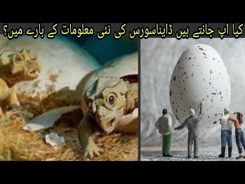 #Discovery #Dinosaurs Discovery dinosaurs full episode in urdu ||