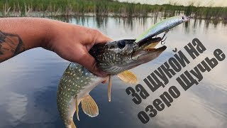 Тверская область озеро щучье рыбалка