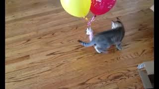 Прикольный кот поднимает настроение   Приколы до слез - Collab #138