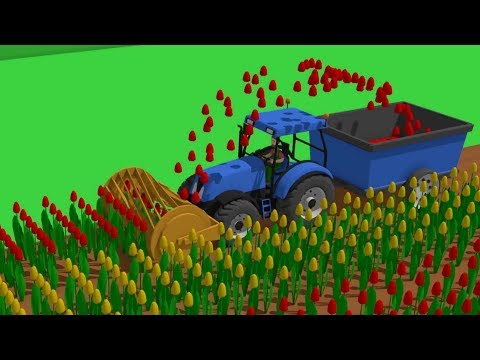 Springtime Blue #Tractor | The Story of the Tulips - Planting to Harvest | Traktor Zbiór Tulipanów