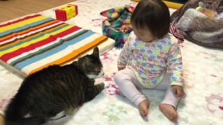 赤ちゃんと猫(ハーロックの反撃)