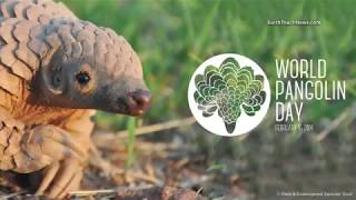 Cutest Pangolin Rolls In Mud!! (CUTE!)