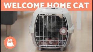 Welcome a CAT to Your HOME 🐱 🏠 How long does it take to adapt?