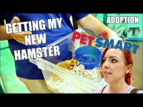 GETTING MY NEW HAMSTER | Petsmart Adoption | Syrian Hamster