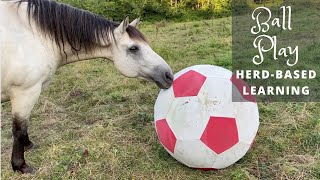 Equine Ball Play - Herd-Based Learning & Fun!