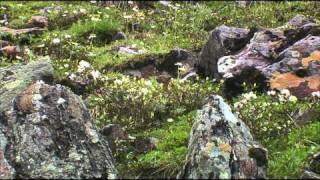 Дикая природа России 3. Siberia / Cибирь.1080p