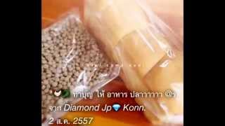 preview picture of video 'GO thai city #Plk.'