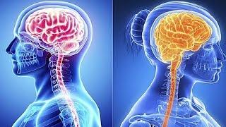 Мужской и женский мозг, есть ли отличие. В чём сходство, отличие между мужчиной и женщиной