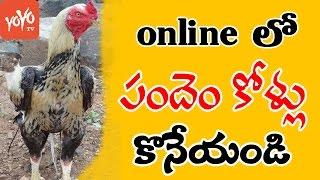 పందెం కోళ్లు  కావాలా OLX  లో కొనేయండి  OLX Special Offers For Sankranthi  YOYO TV Channel