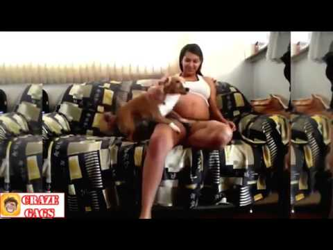 Pregnant Women And Dogs Protecting Best Dogs Pregnant Momsfunny Videos - [www.MangaScan.Live]