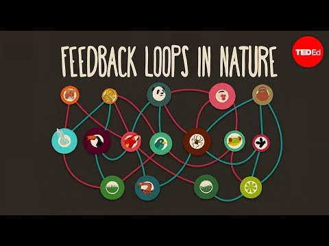 Feedback loops: How nature gets its rhythms – Anje-Margriet Neutel