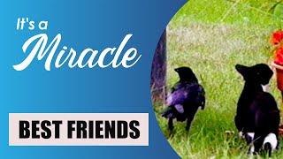 Best Friends - It's a Miracle