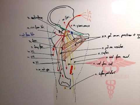 Unguente pentru artrita articulațiilor