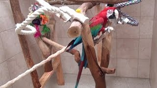 Santina Green Winged Macaw - Going Away Routine