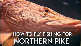 Pike Fly Fishing Basics