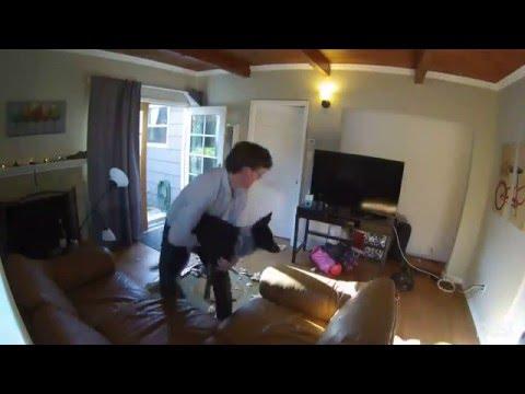 Μία κότα και 2 σκυλιά έκαναν το σπίτι άνω κάτω