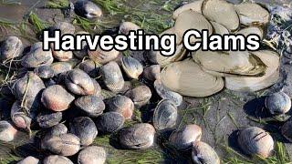 Digging Clams at Nanoose Bay // Tips for Clamming // Nanoose Bay Recreational Shellfish Reserve