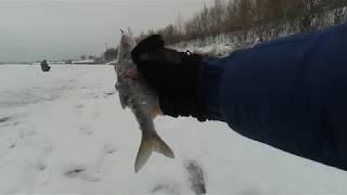 ЛОВЛЯ ПЛОТВЫ  на ГВОЗДЕКУБИК и ГВОЗДЕШАРИК ! Зимняя рыбалка 2018-2019!