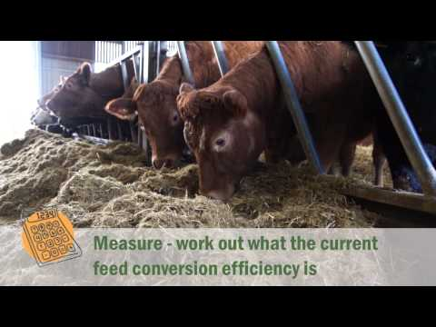 Tried & Tested Feed Planning for Cattle and Sheep
