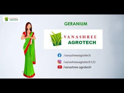 Geranium Plant