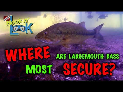 Where are Largemouth Bass Most Secure?