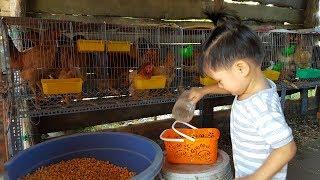 Trò Chơi Bé Tập Chăn Nuôi ❤ Tin Đi Cho Gà Ăn ❤ Kids Toy Media