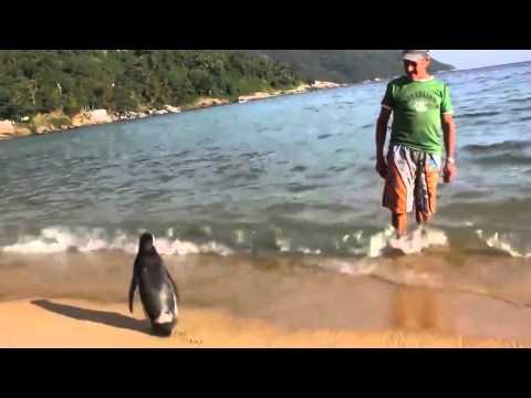 Este Homem Salvou Um Pinguim e Tem Uma Surpresa Todo o Ano!