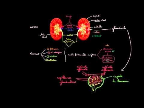 La pression artérielle, la vision et