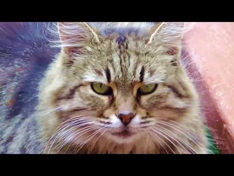 Кошки любят поспать, Колыбельная / Go to Sleep My Little One, Cat Lullaby