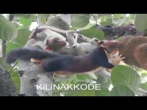 Проказница мартышка и сосредоточенный грызун