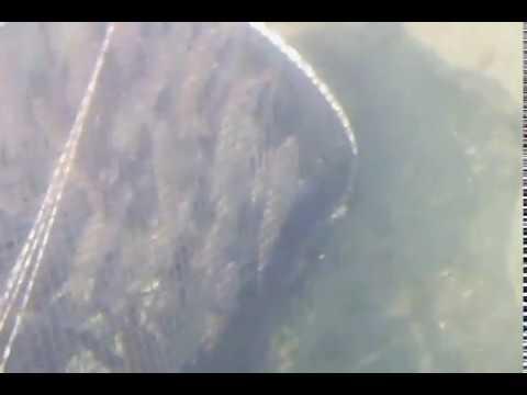 Pesca del Fiume Klyazma