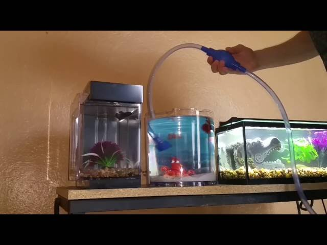 How to do a water change on a betta aquarium tank