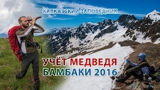 Учёт Медведей. Кавказский заповедник. Бамбакское нагорье, 2016