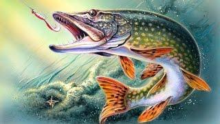 Ю тв рыбалка  8 выпуск