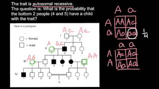 How To Solve Pedigree Probability Problems