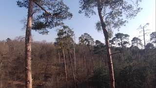 RAW FPV Freestyle How Not To Get Lost In The Forest