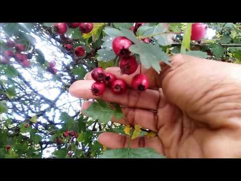Kung paano gumawa ng green slimming coffee